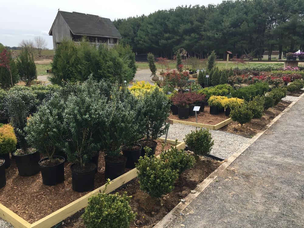 shrubs 4.jpg