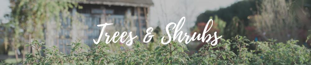 trees-shrubs