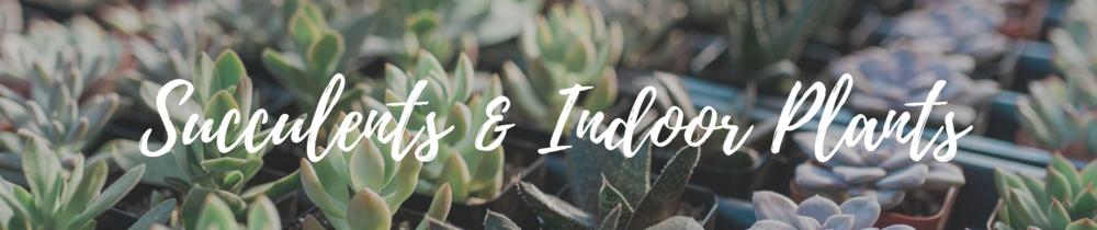 succulents-indoor-plants