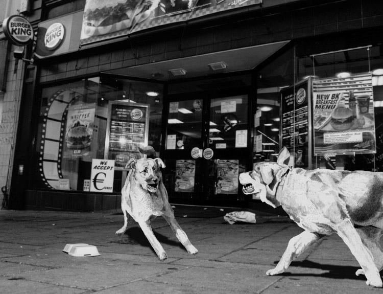 dog-4.jpg