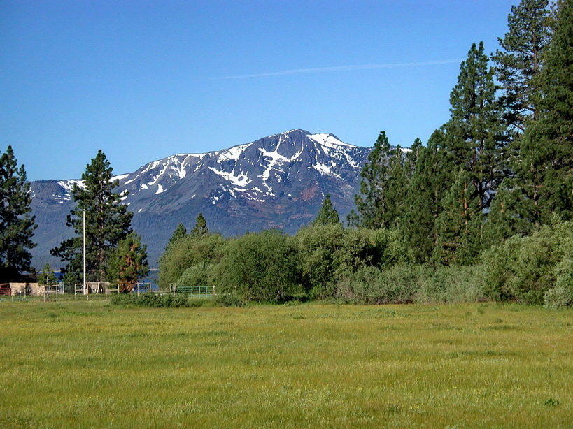Bonanza meadow #1.jpg