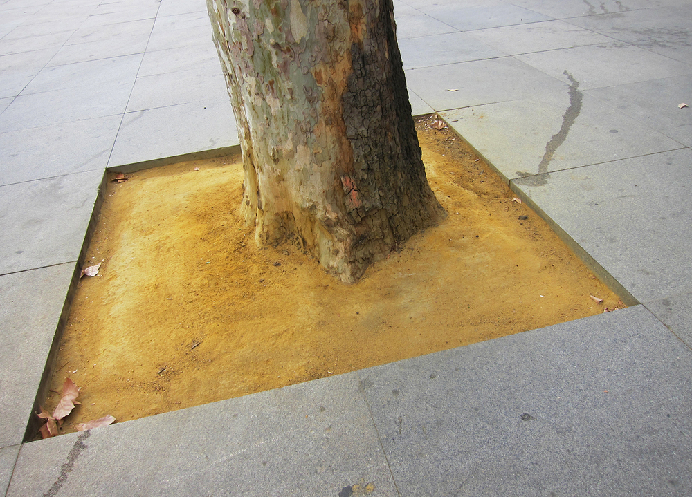 x Loop 5 image 6 Madrid 2012 tree trunk in yellow dirt in pavement.jpg