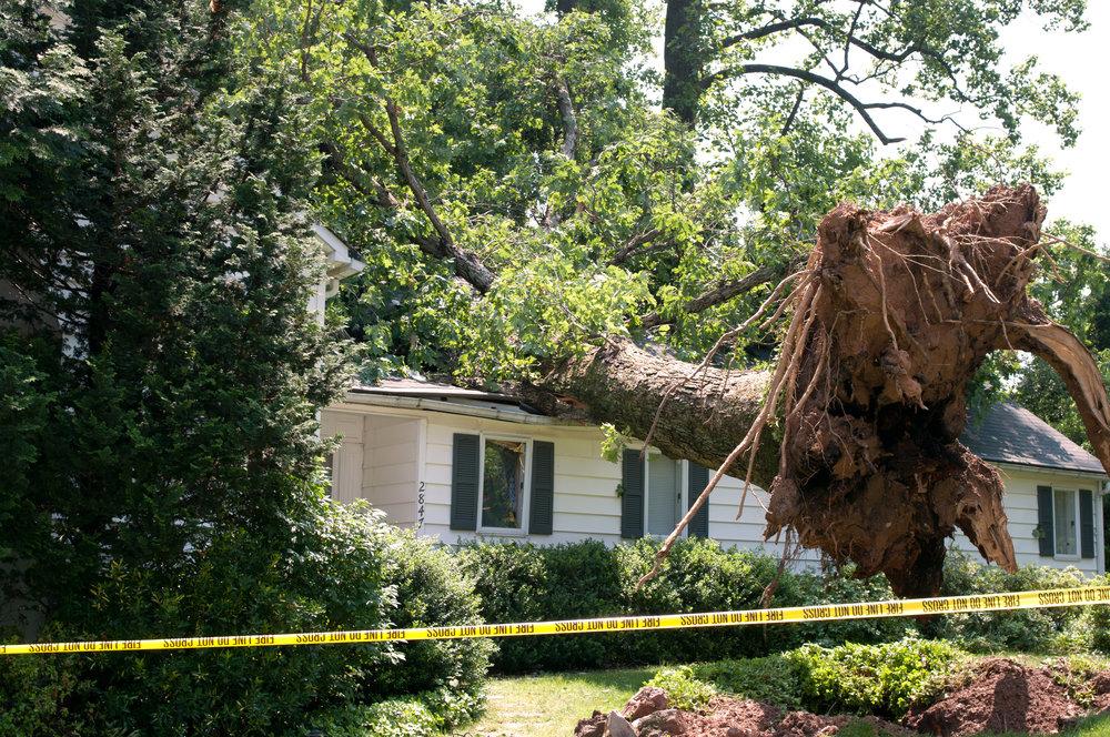Tree Roof Damage.jpeg
