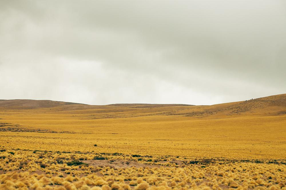 Chile2014066.JPG