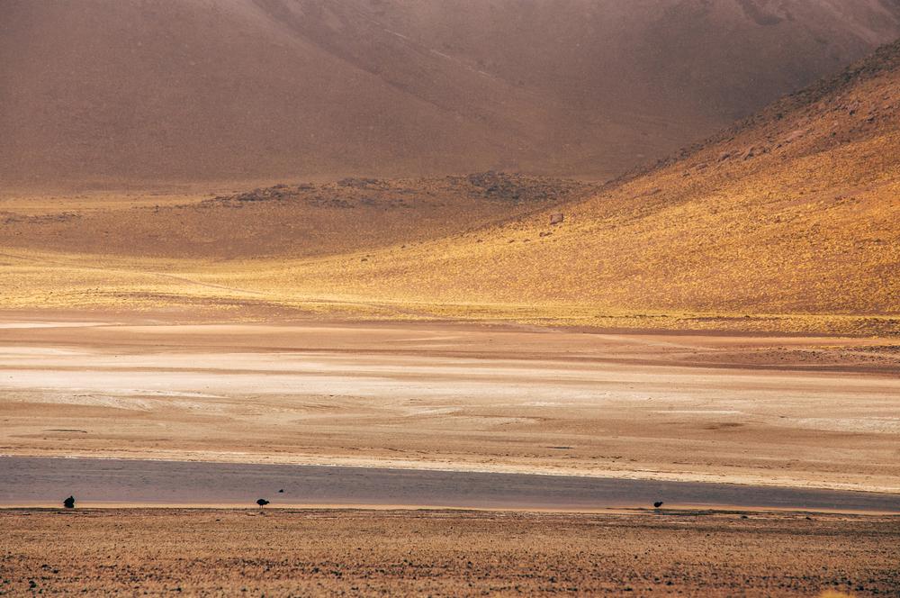 Chile2014073.JPG