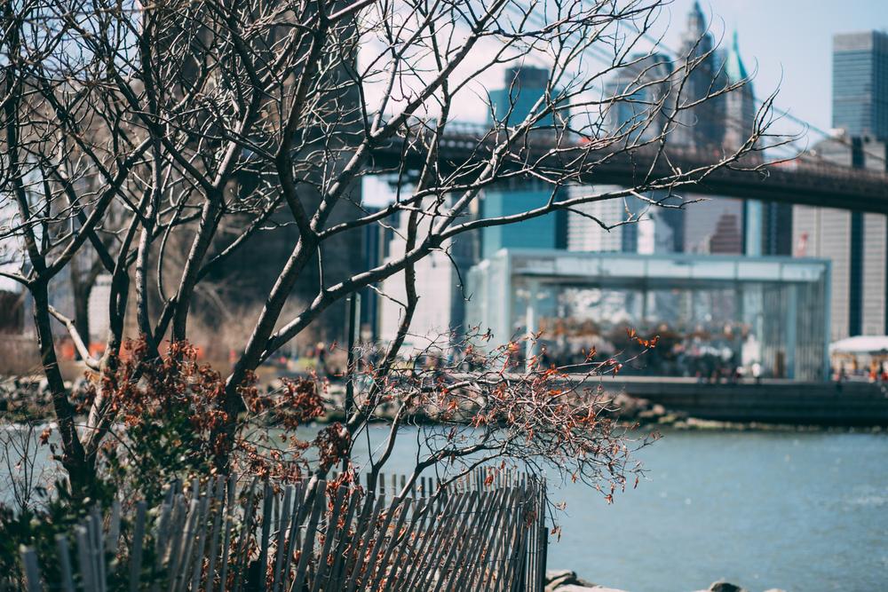 NY2015-98.jpg