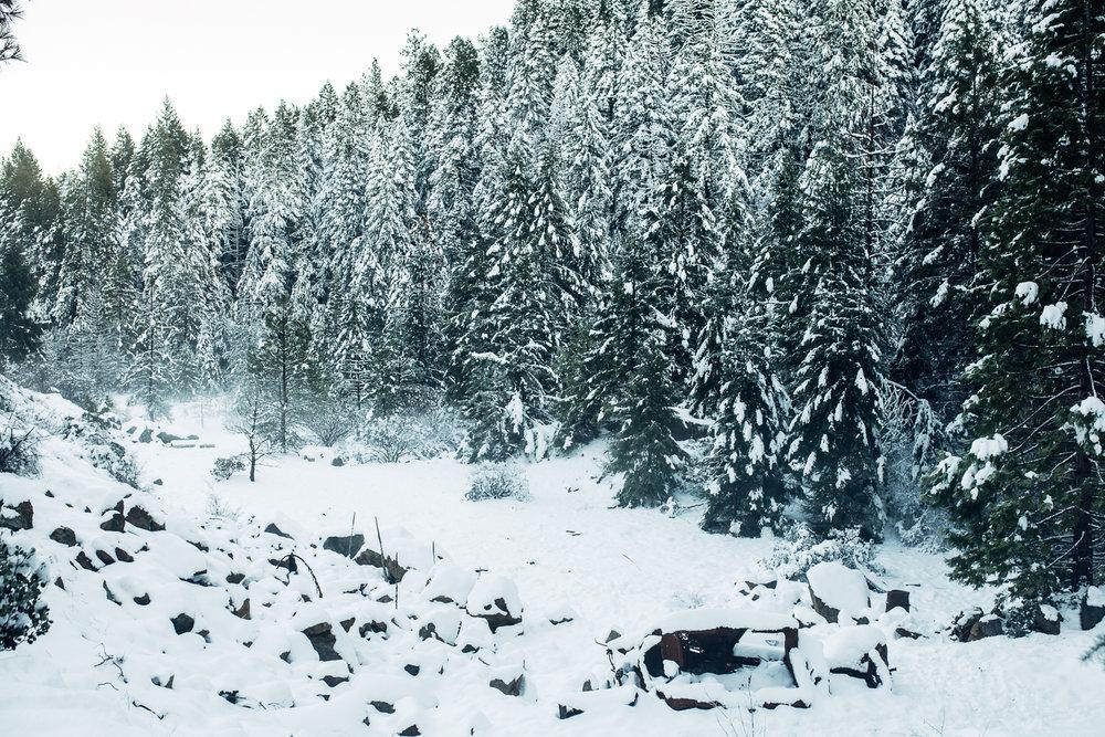 EDP122615_Snow_AllyEstherSlava-35.jpg