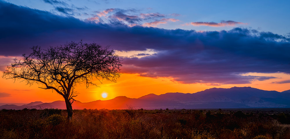 Africa.jpeg