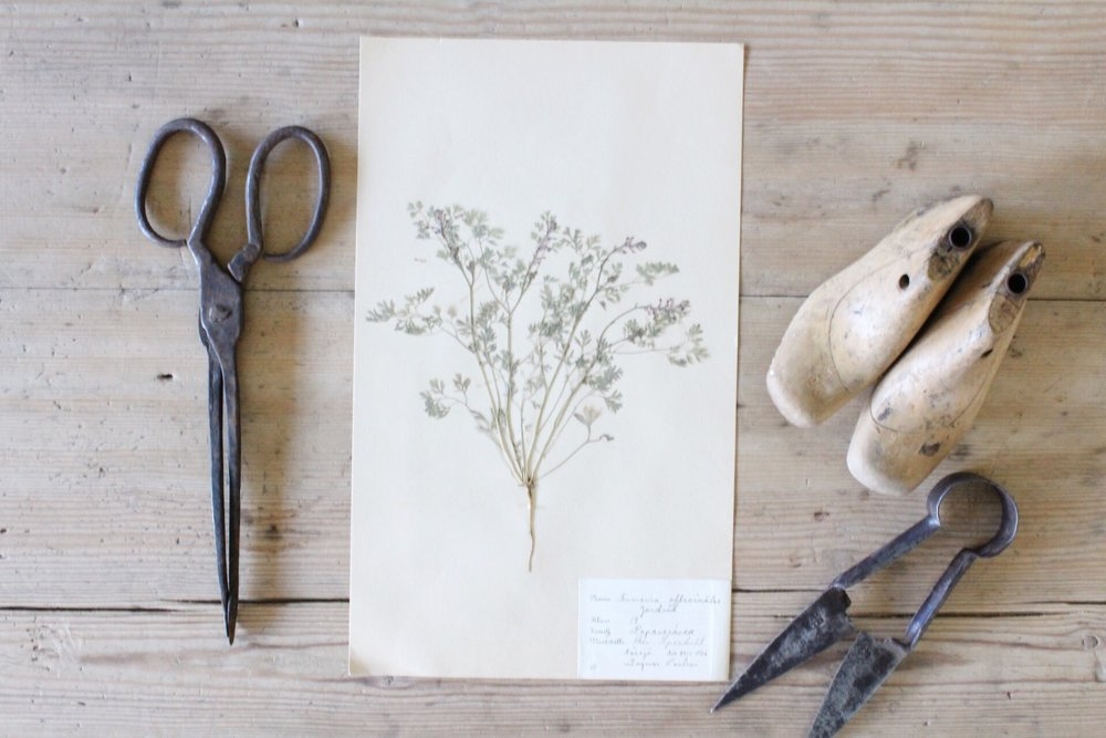 Swedish antique herbarium