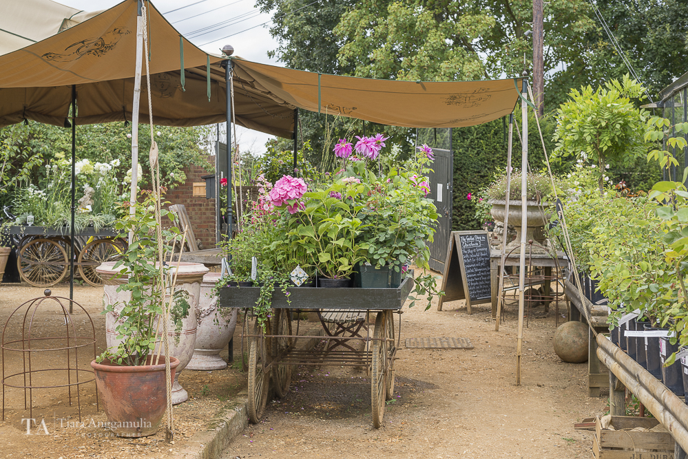 A view of Petersham Nurseries.