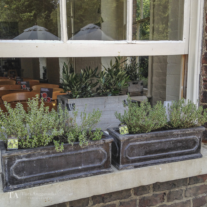 Beautiful herbs box outside the window at Brewhouse Cafe.