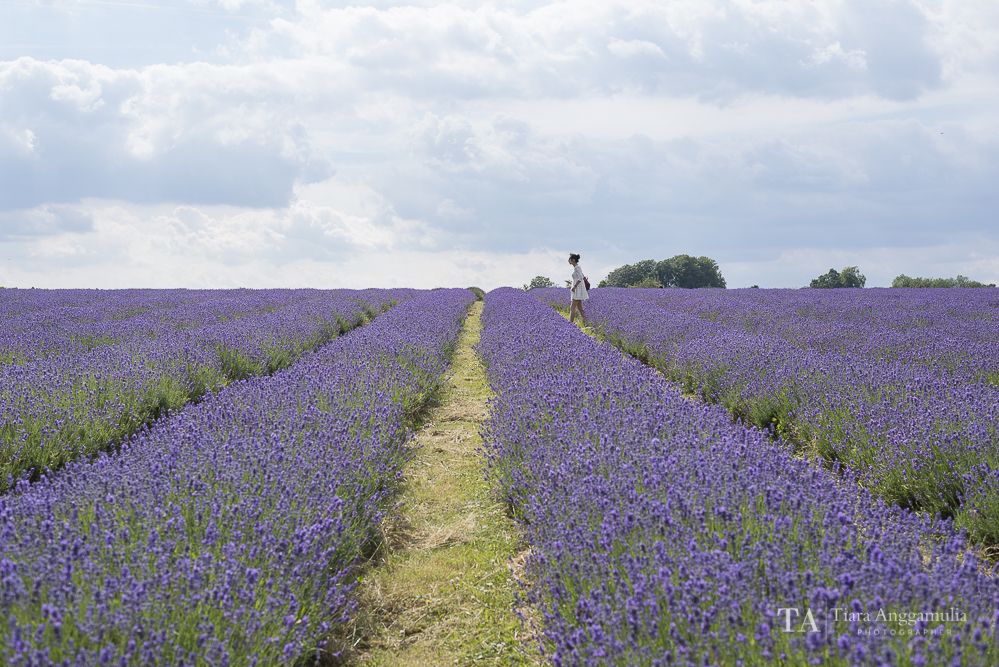 Admiring the lavender field.