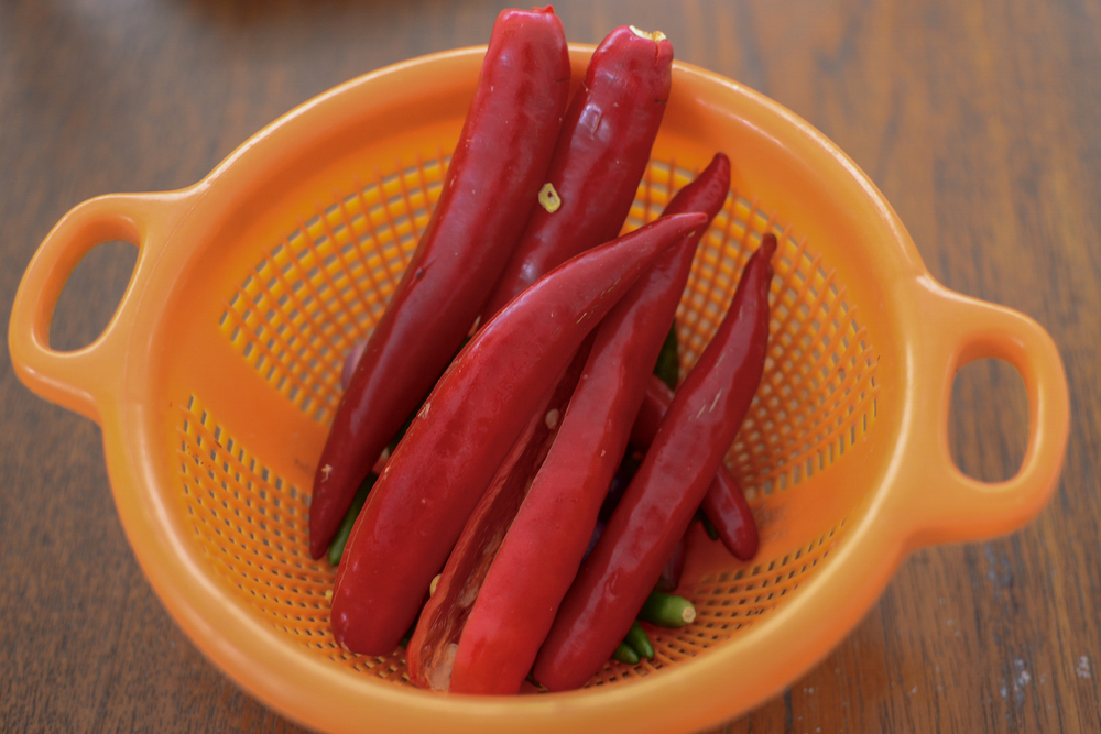 Fresh red chillies.jpg