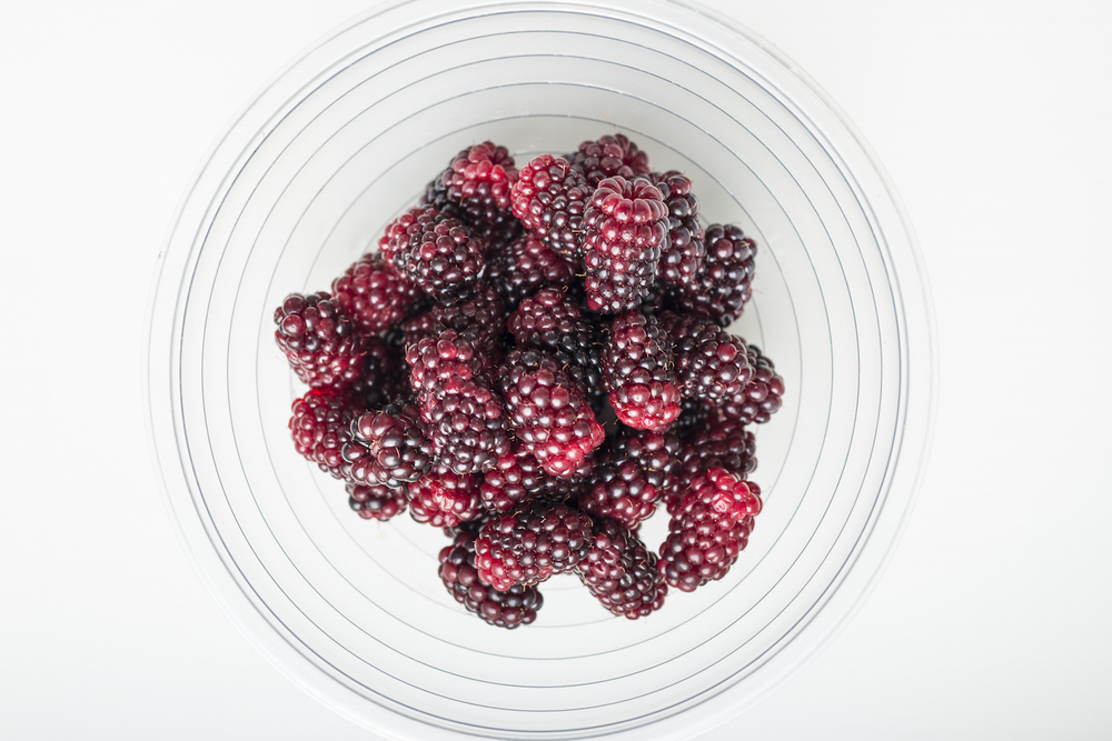 Freshly picked blackberries from the farm.jpg