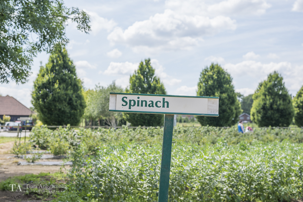 Spinach signage at Crockford Bridge Farm.