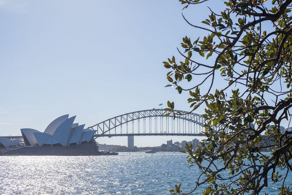 The view from Mrs Macquarie's Chair.jpg