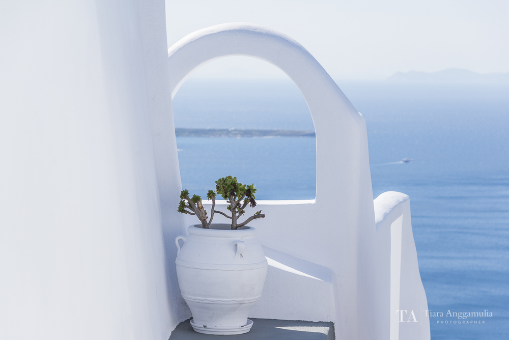 Succulent in a white pot.