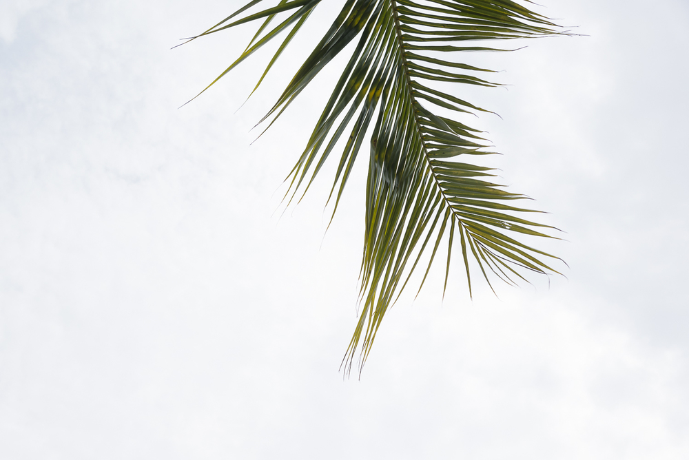 A single palm tree.jpg