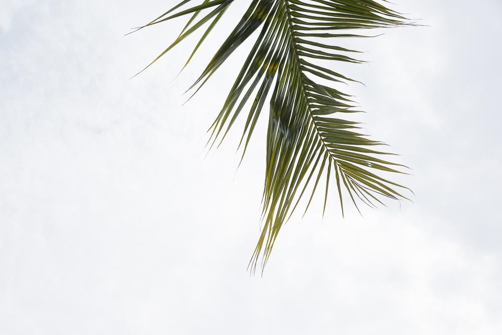 A single palm tree.jpg