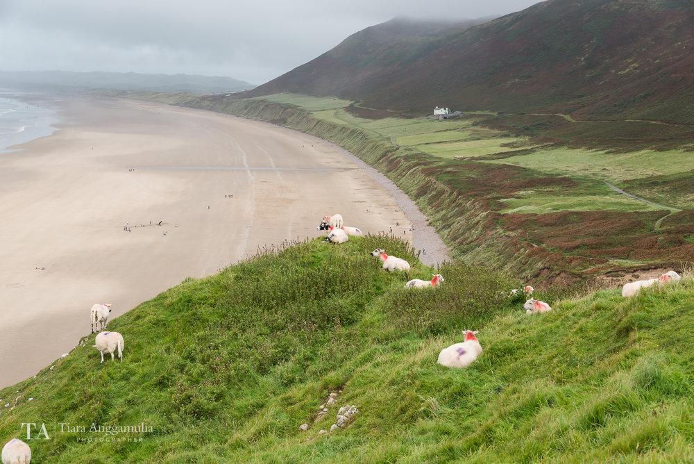 Wales 05.jpg