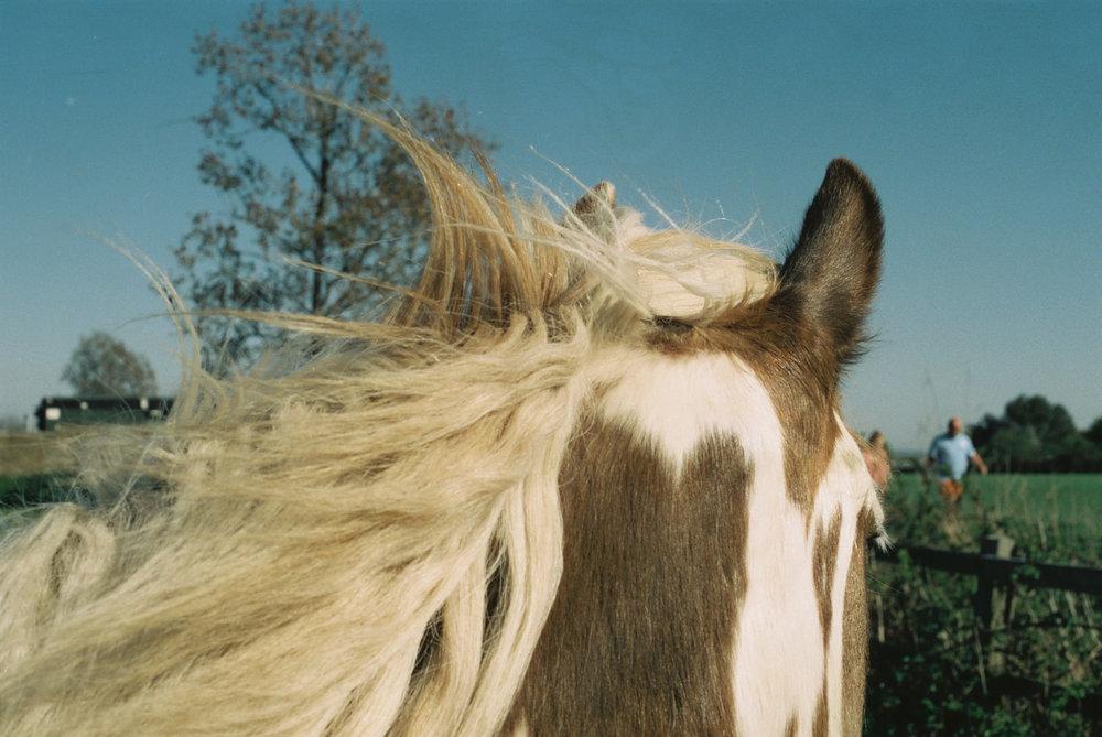 Pony, Kent