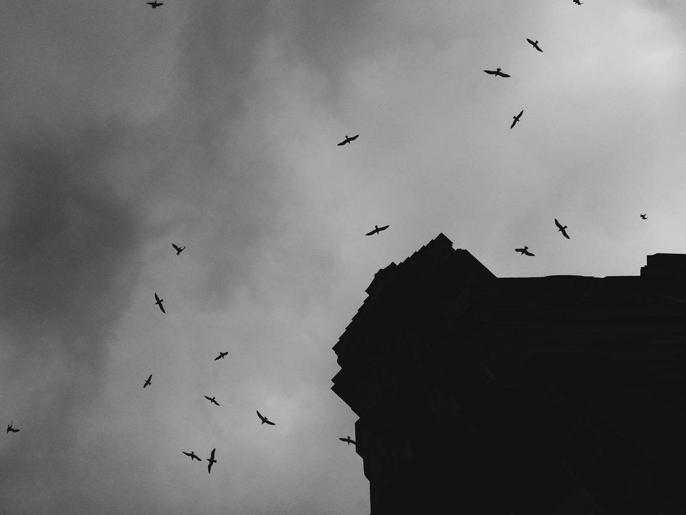 Birds, Glasgow