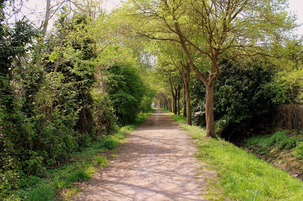 nature_path.JPG