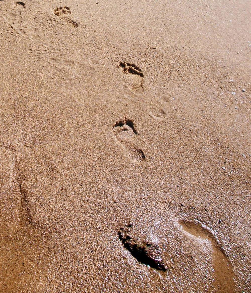 footsteps_sand_puerto_rico_2012.JPG