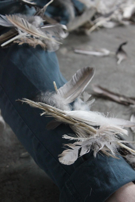 feathering 8.jpg