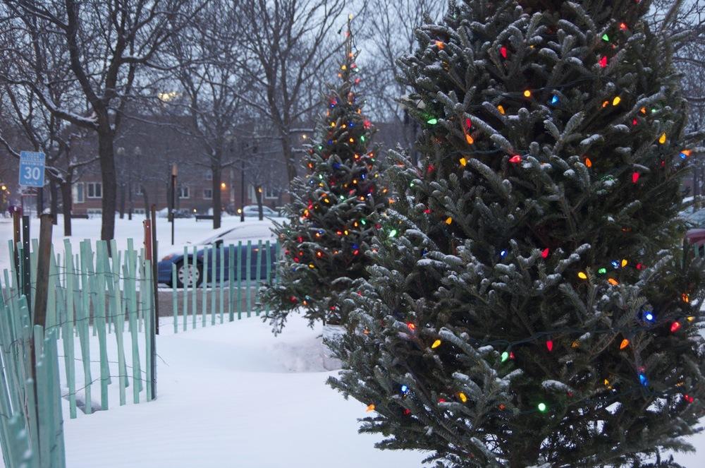 Deux sapins de Noël, avenue du Mont-Royal