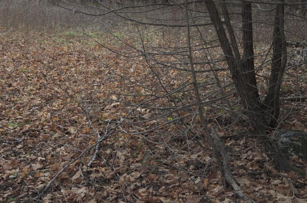 commenter >  Les feuilles au sol, Rang Corriveau, 1/2  < comment