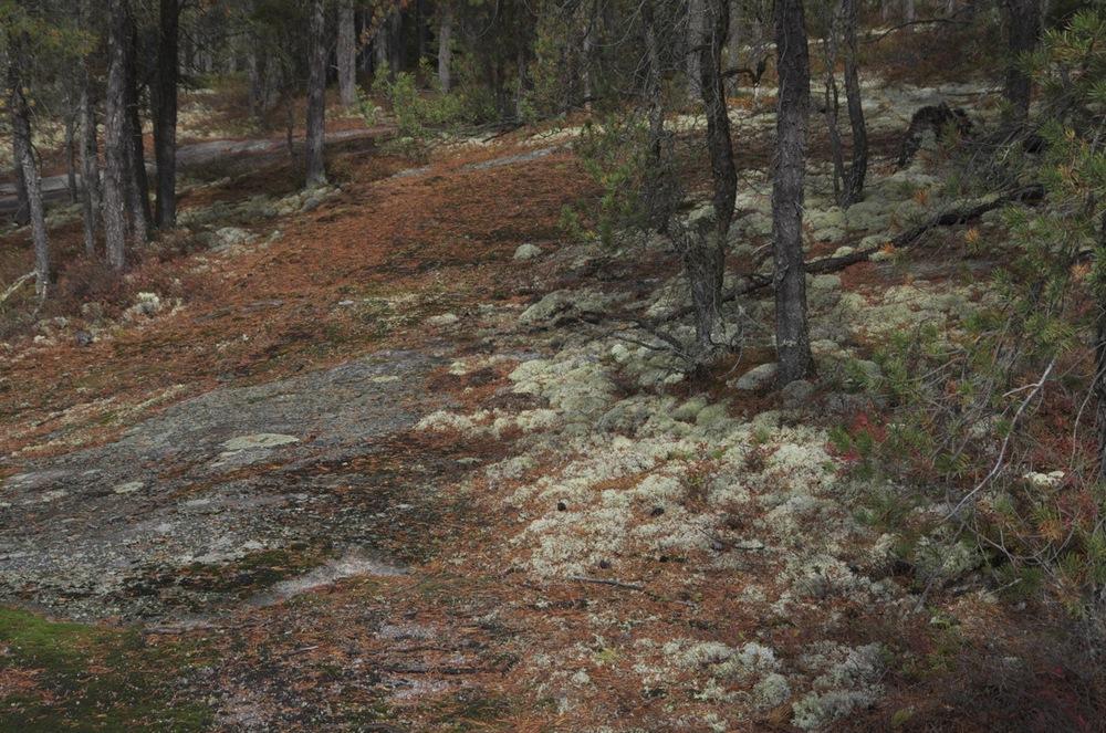 commenter >  Épinettes, mousse et granite, Cap à l'Ouest, 4/4  < comment