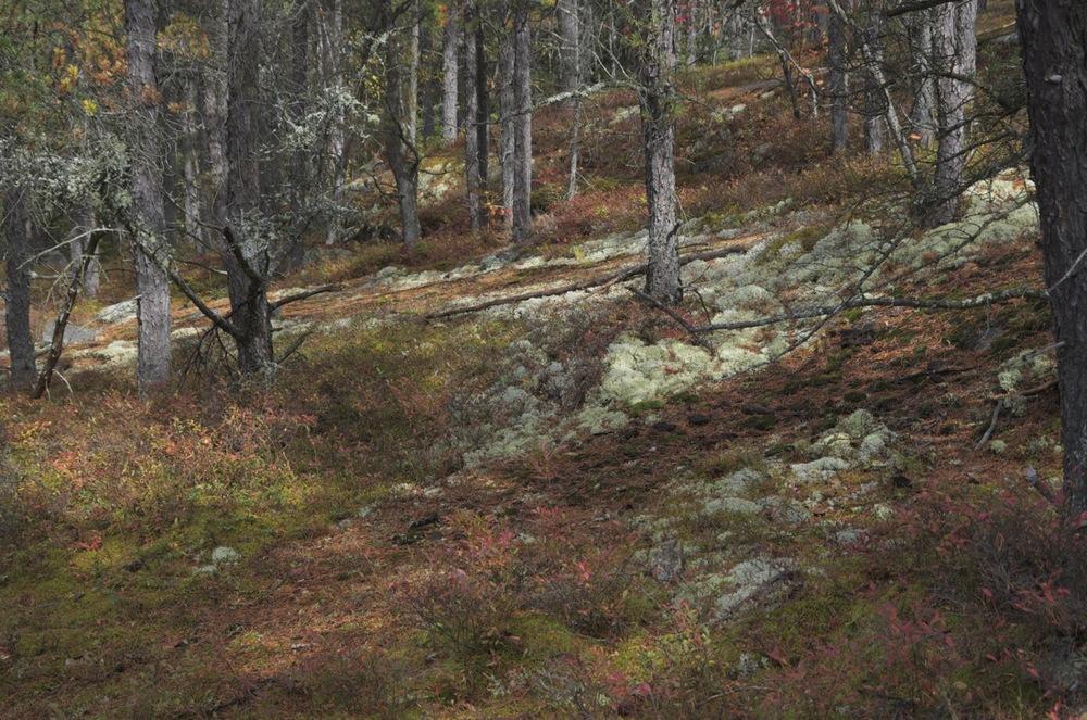 commenter >  Épinettes, mousse et granite, Cap à l'Ouest, 2/4  < comment