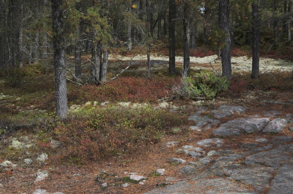 commenter >  Épinettes, mousse et granite, Cap à l'Ouest, 3/4  < comment