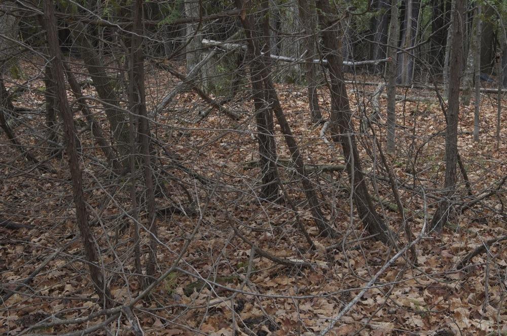 commenter >  Les feuilles au sol, Rang Corriveau, 2/2  < comment