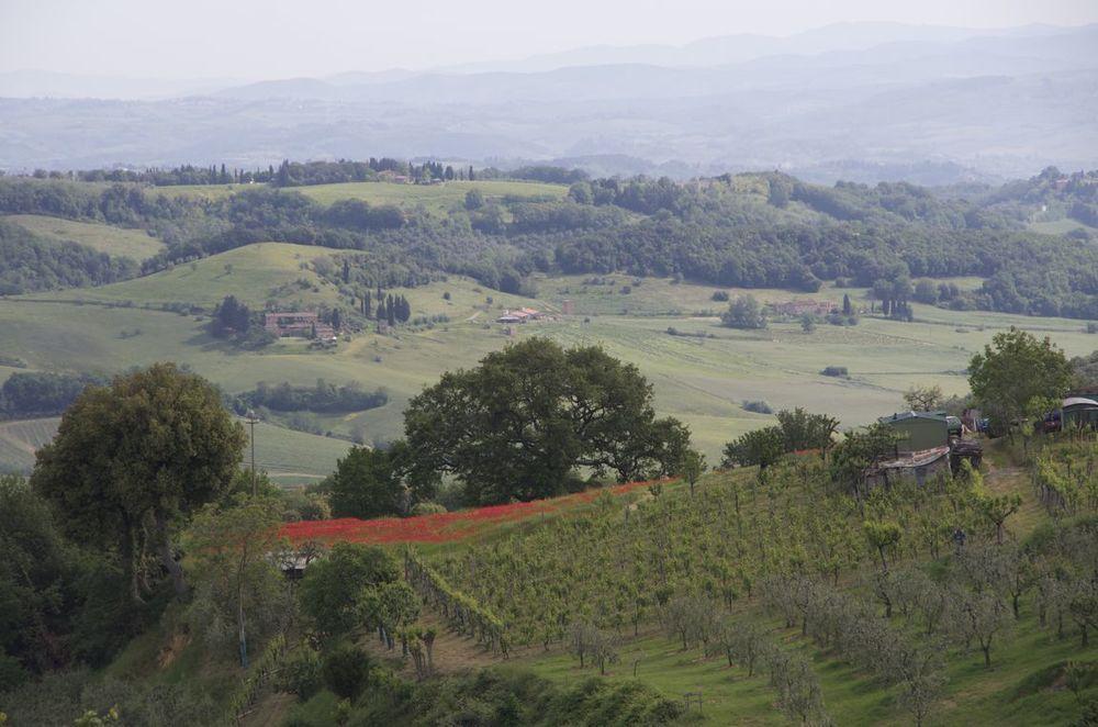 Commenter > Strada provinciale 47, al sud di San Gimignano (papaveri)  < comment