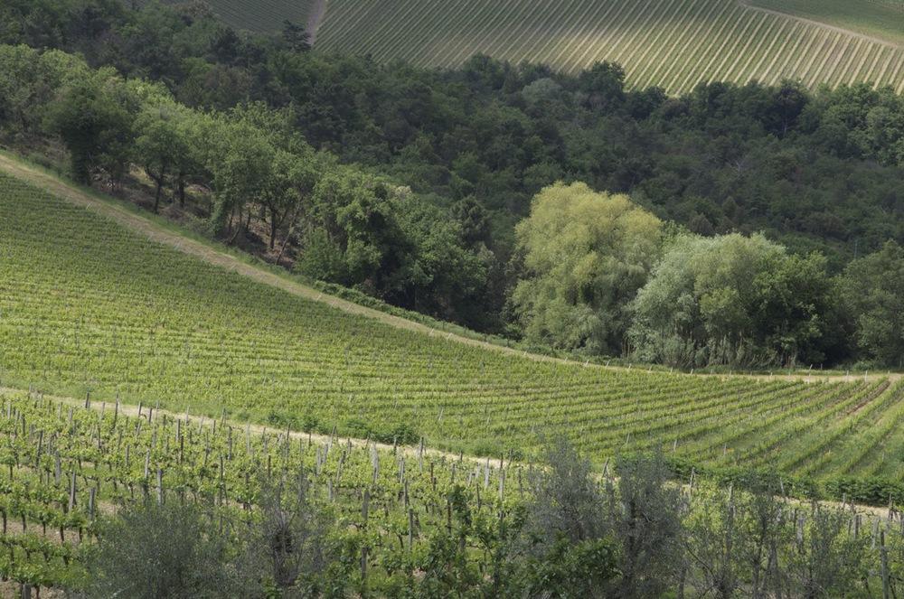 commenter >  Le vigne dello Brolio  < comment