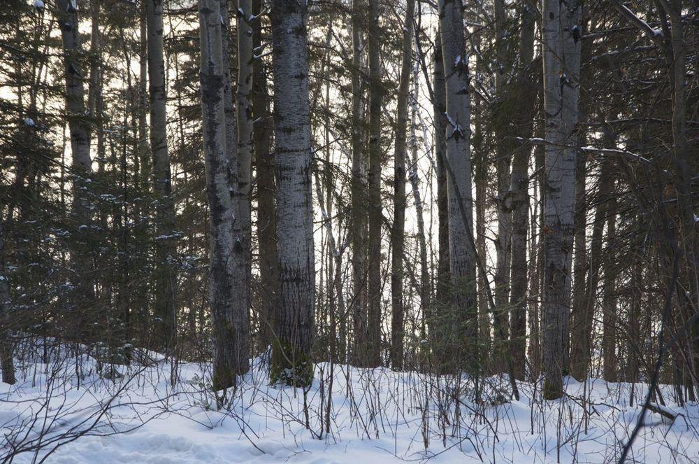 commenter >  Sentier Eucher, 1/2 (trembles en hiver)  < comment