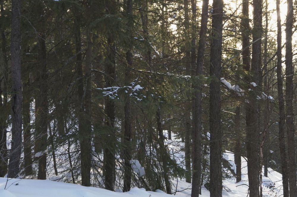 commenter > Sentier Eucher, 2/2 (pins en hiver) < comment