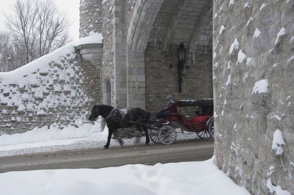 commenter >  Porte St-Louis (cheval, cocher et calèche)  < comment
