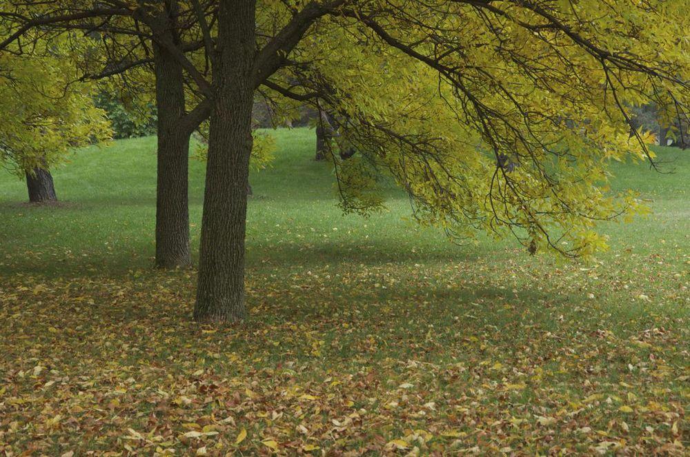 Parc Maisonneuve (après l'été avant l'automne)