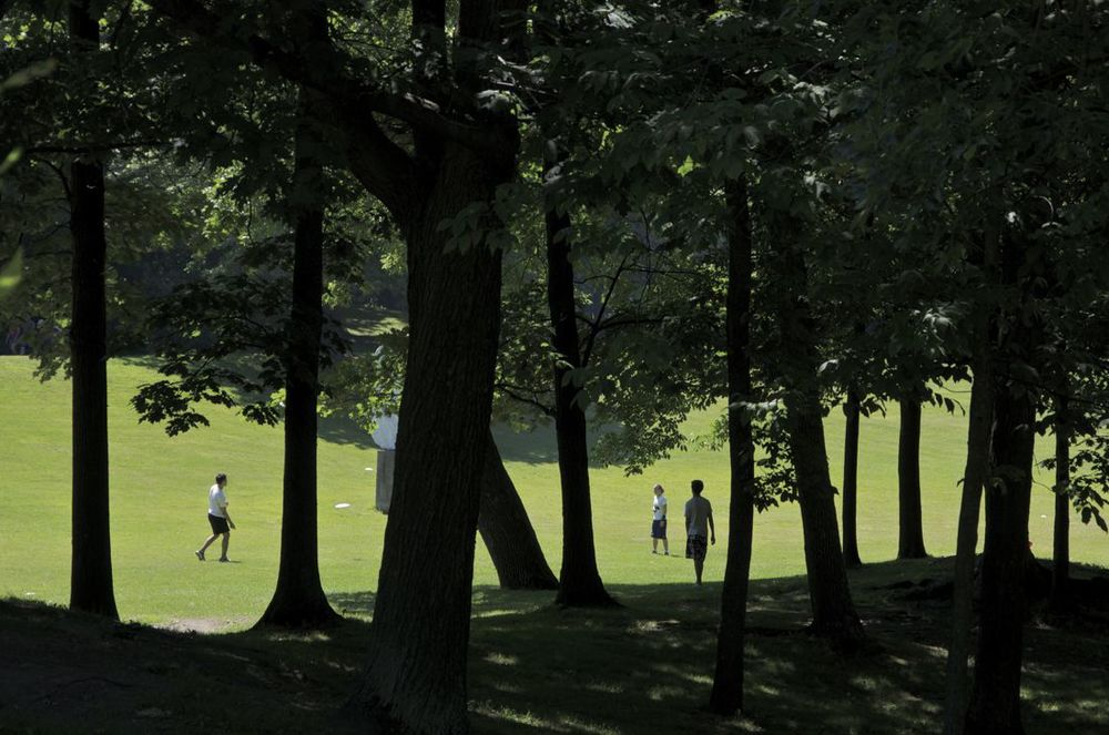 Parc du Mont-Royal (freesbee)