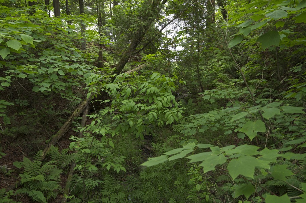 Sous-bois avec arbre tombé II