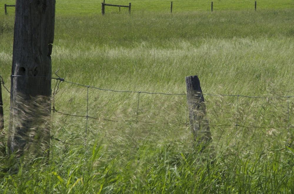 Paysage avec vent - Landscape with Wind : Étudeno. 1