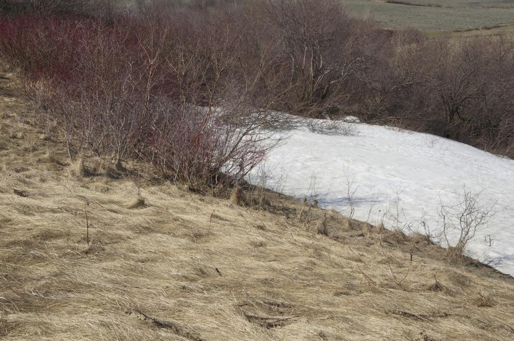 Dernières langues de neige, St-Pierre-de-la-Rivière-du-Sud, 2/2