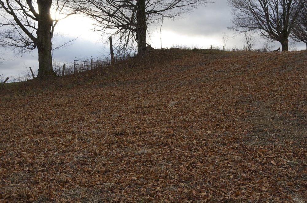 Sol recouvert de feuilles roussies, Chemin des Érables,Eccles Hill