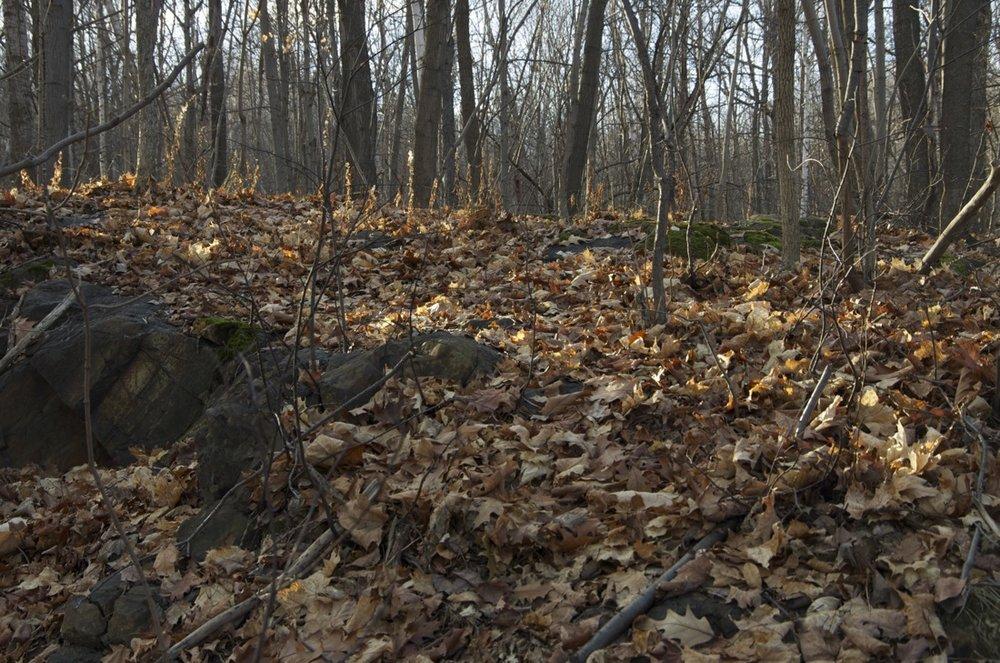 Sous-bois du Mont-Royal, en décembre