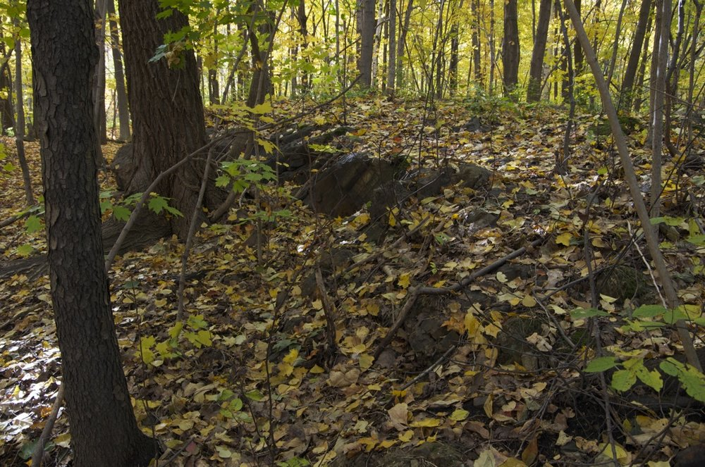 Sous-bois du Mont-Royal, en octobre
