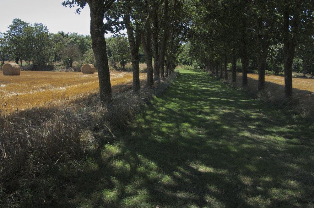 Chemin ombragé entre les champs, Trédaniel