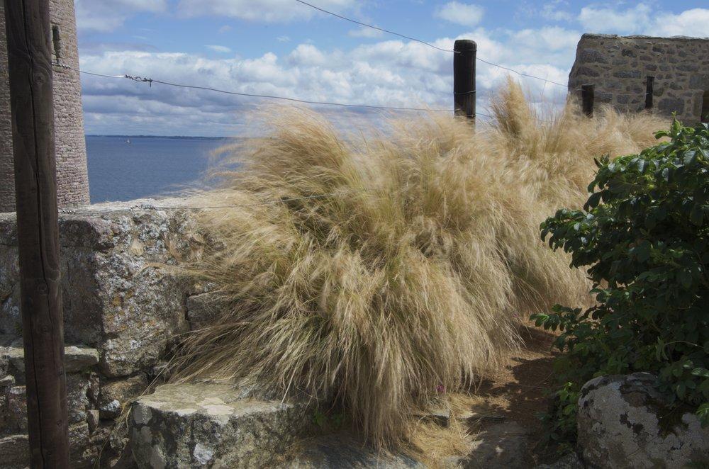 Au jardin médiéval, Fort La Latte